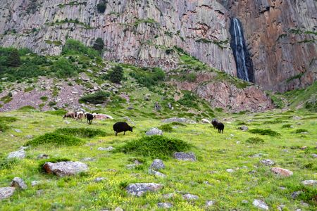 View of several sheep grazing in mountains next to a small waterfall in rocks