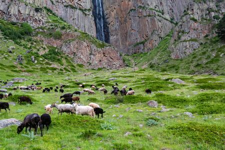 View of several sheep grazing in mountains next to a small waterfall in rocks Фото со стока - 136262034