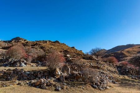 Stone remains of abandoned balkar village and barberry trees in North Caucasus