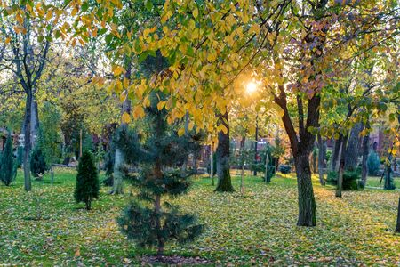 Autumn park vegetation close. Various green trees and setting sun in background