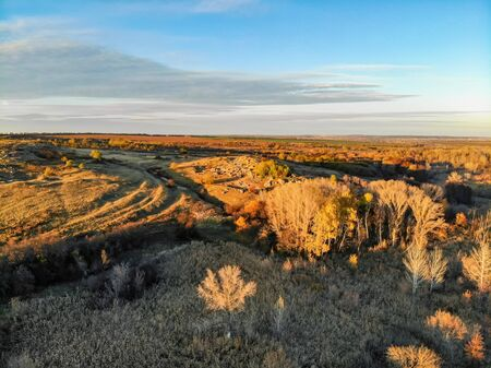 Aerial view of golden trees in steppe taken by drone Фото со стока