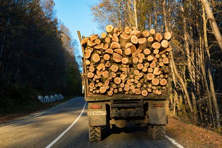 Back view of truck loaded with lumber on bright autumn road