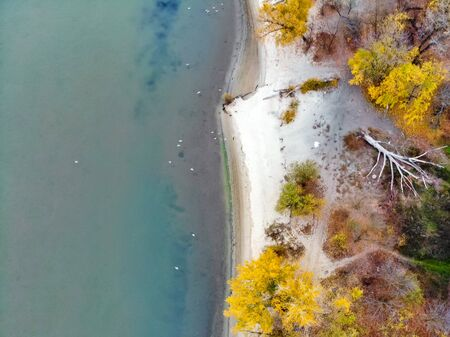Sandy river bank and yellow trees in fall. Rustic countryside landscape in Russia taken by drone Фото со стока