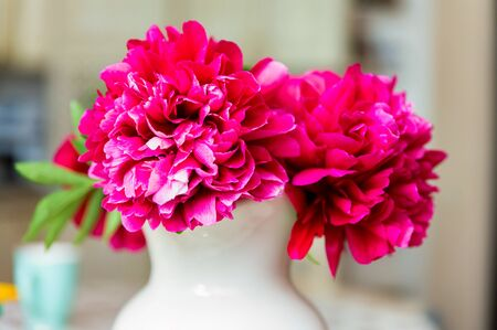Bouquet of blossoming fuchsia peony in spring 版權商用圖片