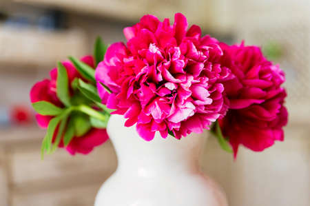 Bouquetof beautiful blossoming peony of bright pink fuchsia color in spring