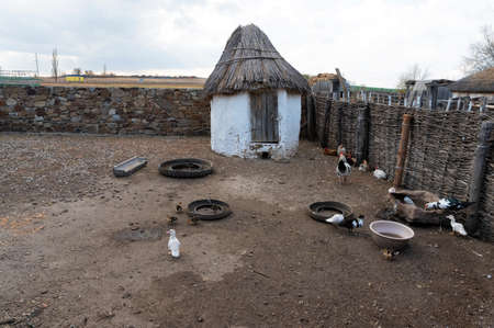 Ducks and chickens in cossacks poultry yard on Don, Russia Stockfoto