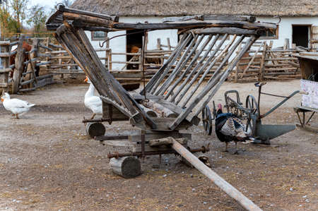 Several cattle, ducks and turkey in cossacks farmyard on Don, Russia Stockfoto