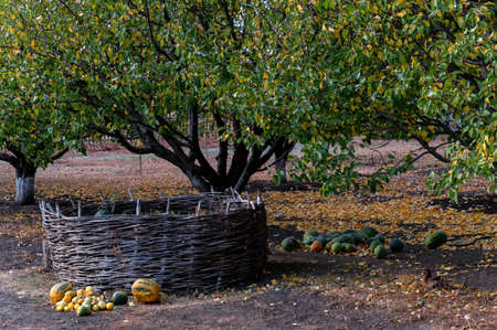 Outside view of small traditional cossack garden and yard Stockfoto