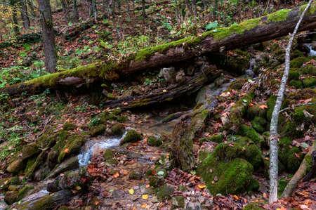 A tree fallen across a mountain stream like a bridge