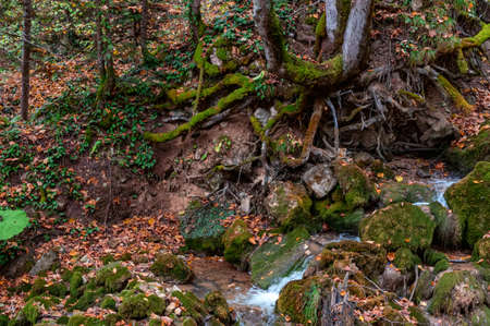 Mountain stream flowing between fallen trees and mossy stones