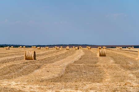 Straw bales on farmland with blue cloudless sky Фото со стока
