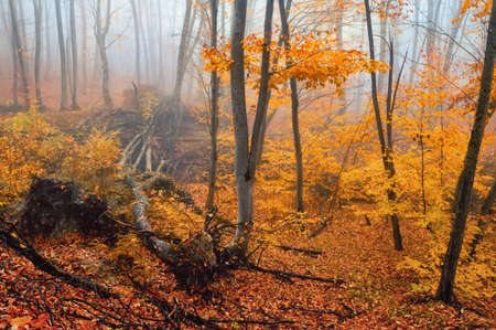 Fantasy foggy forest trees in the autumn mountains Фото со стока