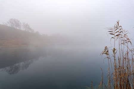 Beautiful landscape with reed on the shore of a misty river