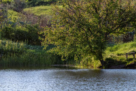 Lush tree on shore of a pond in sun with a wooden bench on edge of green slope
