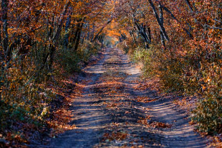 Scenic view of a old road through autumn trees