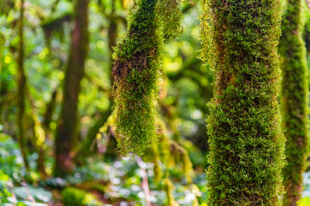 Close up of moss growing on tree branches.