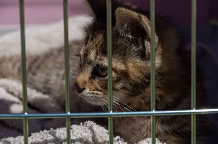 Cat with a big gaze trapped behind bars, gray