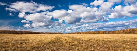 splayed: Panorama. Yellow splayed field of mowing with far off trees under blue sky and clouds.