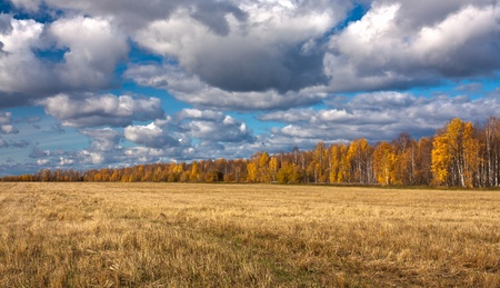 splayed: Yellow splayed field of mowing with far off trees under blue sky and clouds.