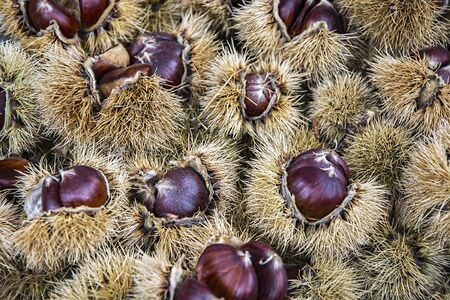 castaÑas: castañas frescas Foto de archivo