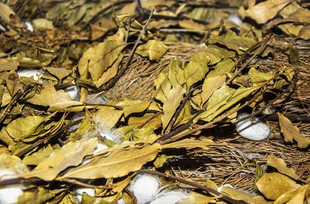 capullo: la producci�n de gusanos de seda de capullo