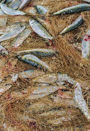 fishingnet: fish in fishing net