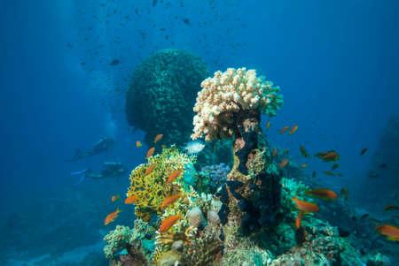 Underwater world. Coral fishes of Red sea. Egypt Foto de archivo