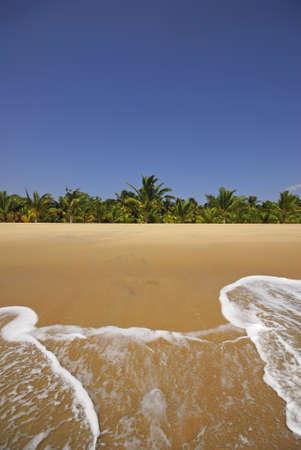 yellow sand beach. One of India finest beaches - Varkala beach, Kerala, India