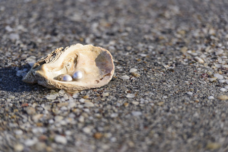 perls: Australian pearls over an old shell  Stock Photo