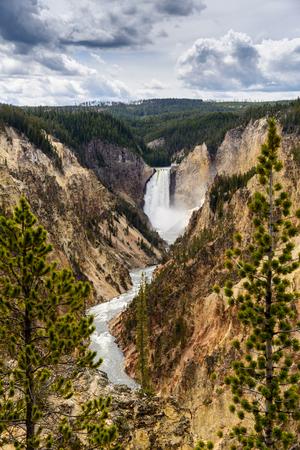 lower yellowstone falls: Lower Falls of the Grand Canyon of Yellowstone, Yellowstone National Park, Wyoming Stock Photo