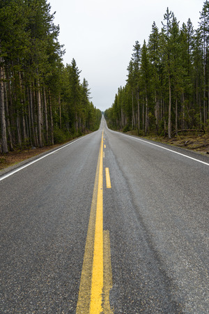 A view down a straight, modern paved highway passing through a pine forest.