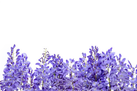Wisteria flowers, green leaves border for an angle of page over a white background. decorative element Foto de archivo