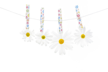 Clothespins on the rope hangs daisies, white background.