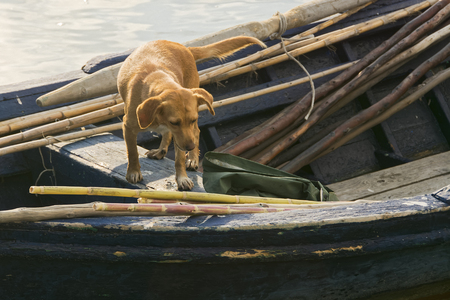 The dog accompanies the fisherman while fishing in the lagoon. Archivio Fotografico