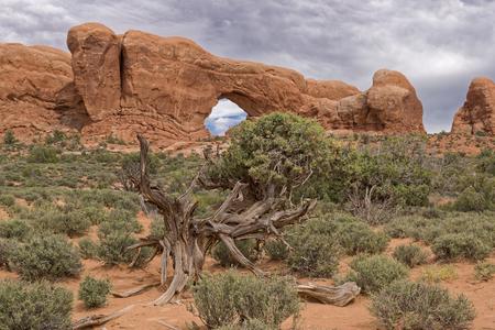 Archi di roccia rossa. Arches National Park, Moab, Stati Uniti d'America. Formazioni geologiche Archivio Fotografico