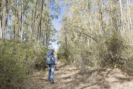 Escursionista nella foresta di eucalipto sardo Archivio Fotografico