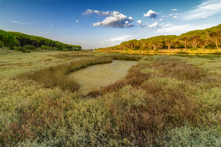 Panorama of the Osala river, a river that flows towards the sea in Cala Osalla, luxuriant Mediterranean vegetation with pines growing on the rocks, curves of the river, Italian island Sardinia 스톡 콘텐츠