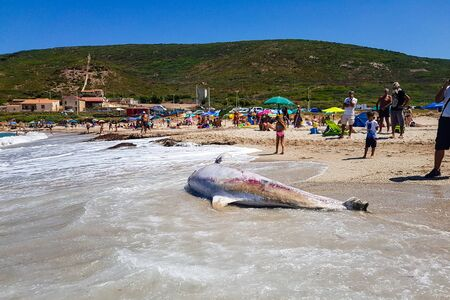 Gonnesa, Fontanamare Beach - August 03, 2019: A protected species of dolphin, in an advanced state of decomposition. Taken ashore by the storm in the beach of Fontanamare, municipality of Gonnesa. Sardinia Southwest, Italy. Tourists with agents of forest  新聞圖片
