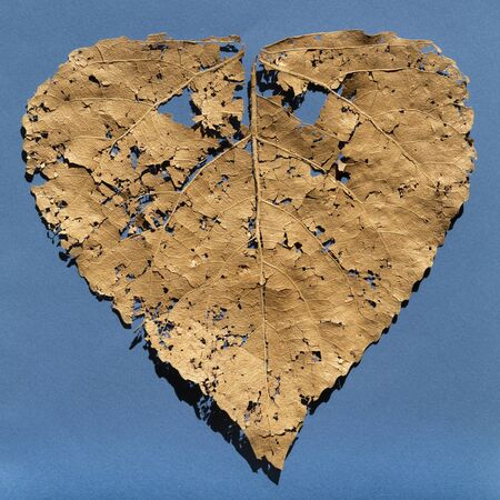 Damaged dry leaf reduced to pieces and small pieces, blue background.