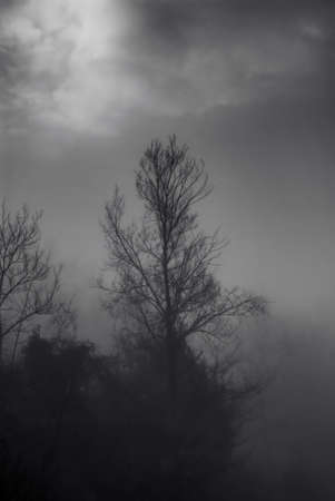 Trees hidden by the fog in winter. Mystical setting.