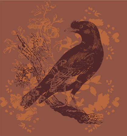 night crow Vector