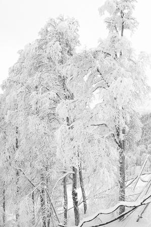 Wonderful winter trees. 版權商用圖片