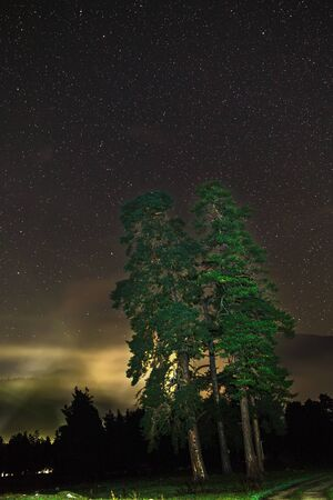 Landscape with a tree. Night sky with stars