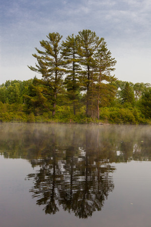 stillness: pine trees and their reflection in a river water