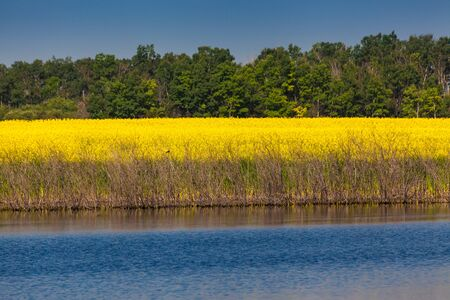 peacefull: blue water, yellow blooming rapeseed and green trees