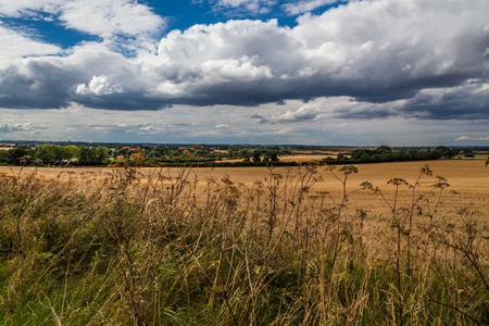 stubble field: stubble field with wild flowers on the foreground and clouds