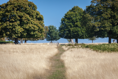 oak trees on a horizon with blue sky and dry yellow grass