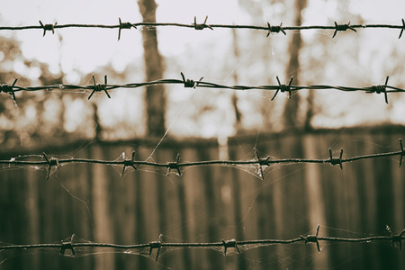 barbed wire fence: Barbed wire in a web on the background of wooden fence, sepia photo