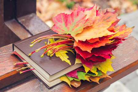 A book with colored leaves embedded in it lies on a bench in the park in autumn Stock Photo