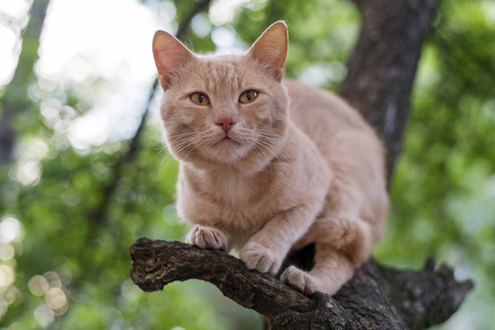 Cute red cat sitting on a tree in spring day